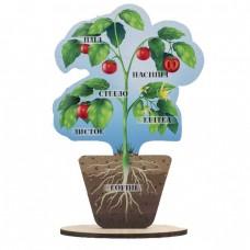 Модель рослини
